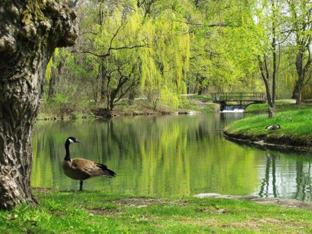 Dufferin Islands
