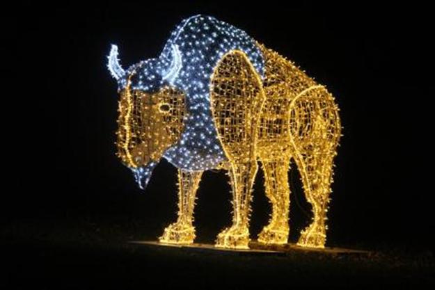 Winter Festival Of Lights Niagara Falls Buffalo